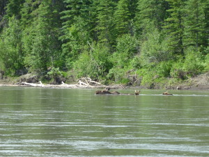 upper stikine river canoeing expedition