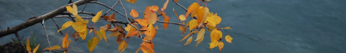 cropped-fall-colours-on-water.jpg